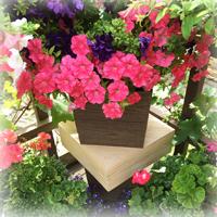 Вазоны для цветов ДПК